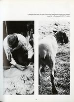 1971061_tb