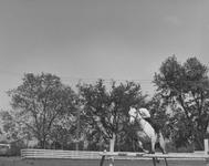 1958_tb