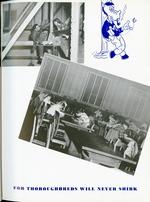 1950010_tb